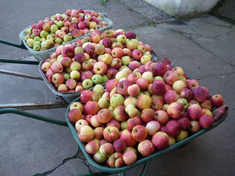 Partie Pommes 2014